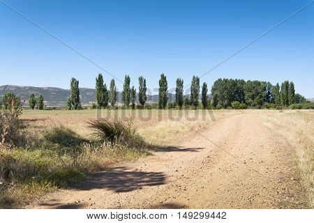 Dirt road to poplar grove in an agrarian landscape in Ciudad Real Province Spain