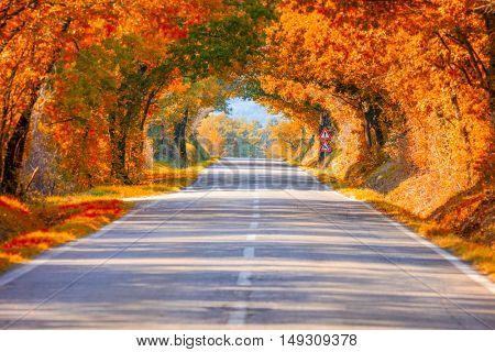 Autumn Fall Road landscape - Real trees tunnel,  beautiful autumnal colors, sunny day