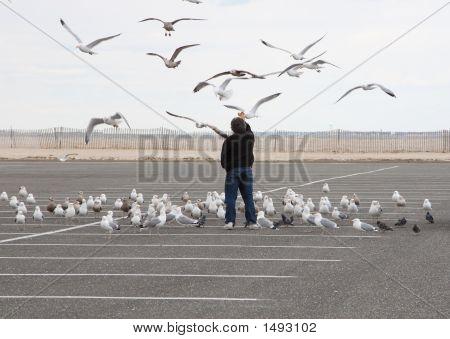 Man feeding seagulls in a parking field near the beach poster