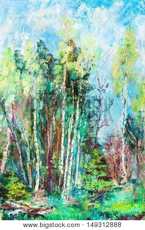 birches on wood edge spring landscape May