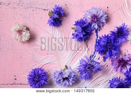 Blue Cornflowers (Centaurea cyanus) on old pink wooden background