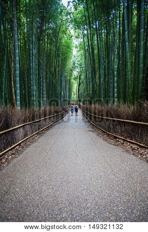 Holiday in Japan - Summer Autumn Transit in Arasiyama Sagano Bamboo, Kyoto
