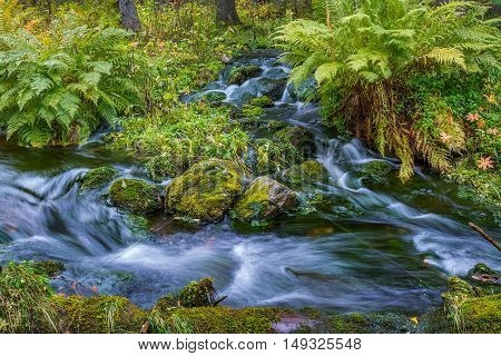 Two small streams flowing in autumnal forest
