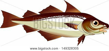 high quality haddock cartoon character include flat design