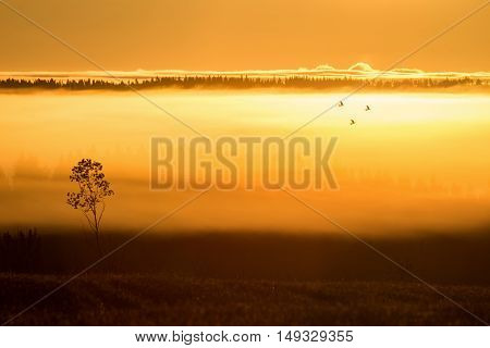 Three pigeon birds flying in misty landscape
