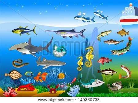 Vector cute cartoon different fishes set