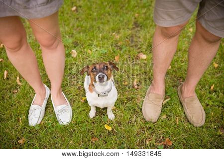Top view on a dog. Woman and man with their nice dog in the park. summer walk with a dog. Beagle breed dog sitting on green grass. top view on family with a dog.