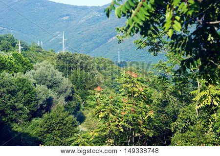 Mountain forests in Montenegro in the summer