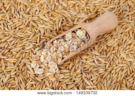 oat flakes in scoop and natural oat grains with husk for background closeup shot. Heap of organic oat grains with oatmeal in wooden spoon healthy food and nutrition. Diet supplements oat grain. Oat grains top view
