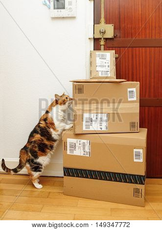 PARIS FRANCE - SEP 4 2016: Cat inspecting multiple Amazon Prime boxes delivered by courier and left by the door by Hermes delivery courier