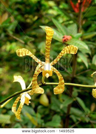 Scorpian Flower