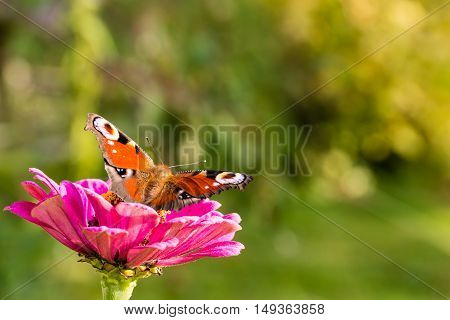 Color Butterfly Leaves A Pink Bloom