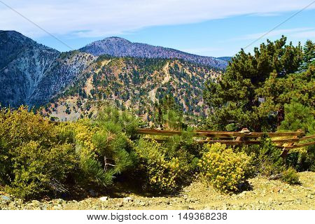 Rustic wooden fence surrounded by Sage Plant Flowers and Pine Trees taken on a mountain ridge in Mt Baldy, CA