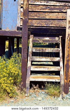 Historic rustic mining structure with a wooden latter beside sage plant flowers
