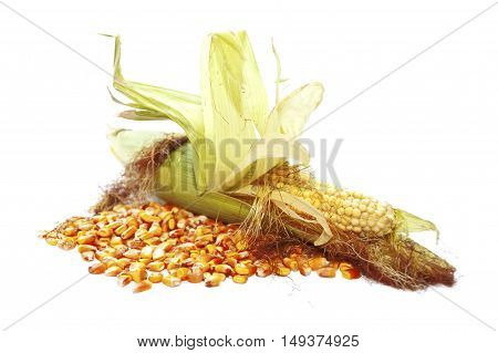Young sweetcorn cob with old corn seed isolated on white background.