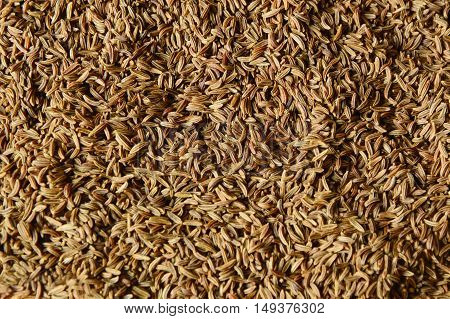 caraway seeds or kemmel (German name)  Helps to expel the stomach and intestines.