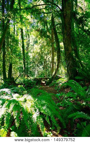 Hiking trail in the forests of Portland Oregon