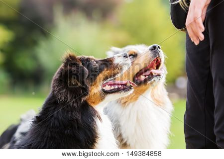 Two Dogs Waiting For A Treat