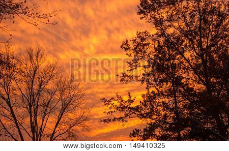 the nights sky as the sun dips below horizon with tree sillhouettes.