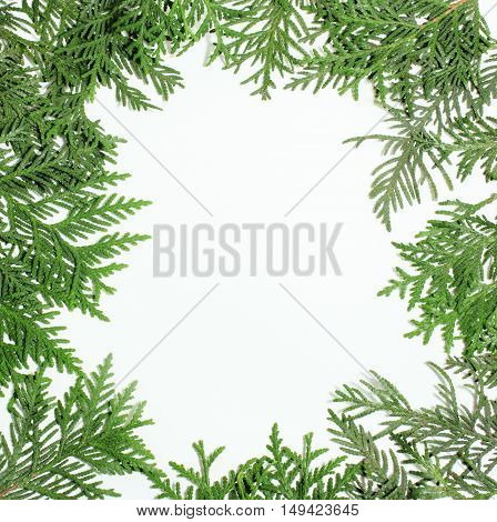 ever green fir tree decoration for christmas card isolated, new year pattern, copyspace white close up