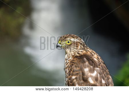 Photo Of The Hawk.