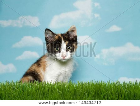 Adorable Calico kitten sitting in grass looking intently at viewer blue background sky with white clouds. Copy space