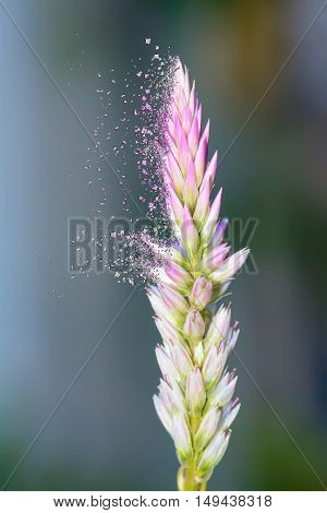 Poaceae on effect shattered. It is feels lonely.