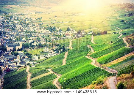 Autumn landscape with vineyards and small town. Viticulture and wine making background