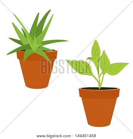 Vector illustration flower plant growing in a pot. Potted plant icon. Little plant seedling. Aloe vera in flower pot isolated on white background. Green plant. Houseplant
