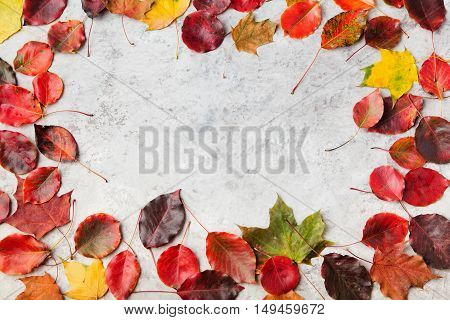 Colorful autumn leaves on a grey stone background. Top view Copy space