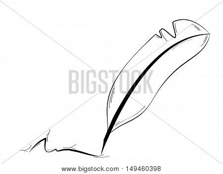 Black quill and abstract signature isolated on white background. Quill as a ancient pen - tool for writing.