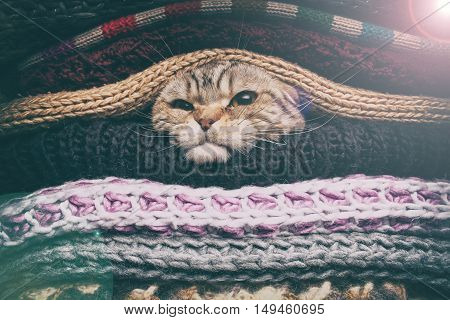 angry cat is preparing for winter wrapped up in a pile of woolen clothes