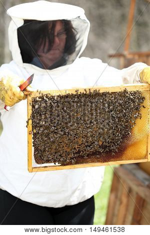 bee keeper is checking a beeswax with bees