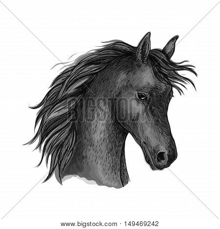 Horse portrait. Black mustang profile with wavy mane and shy look. Artistic vector sketch portrait