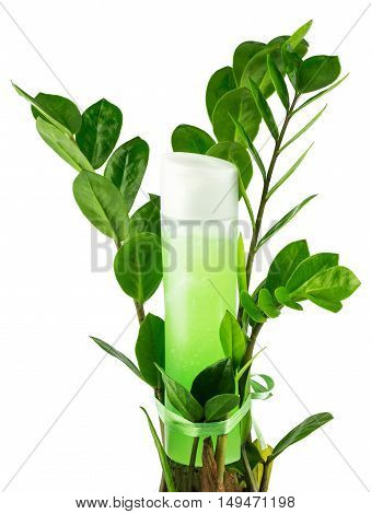 Natural organic herbal liquid green product in a plastic bottle with plant