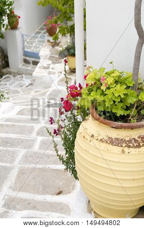 typical street scene with geraniums in pot on stone streets with white paint Lefkes Paros Greek Island Cyclades Greece