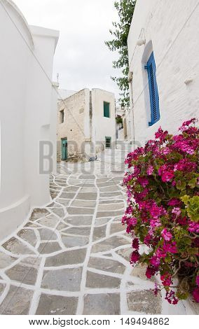 Greek Island Paros historic village Lefkes typical street scene with painted stone street and white classic buidlings with flowers in pots
