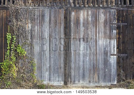Background image the closed entrance of an old wooden warehouse with climbing plants.