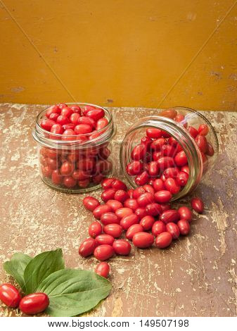 Red fruits of dogwood berries ready for canning