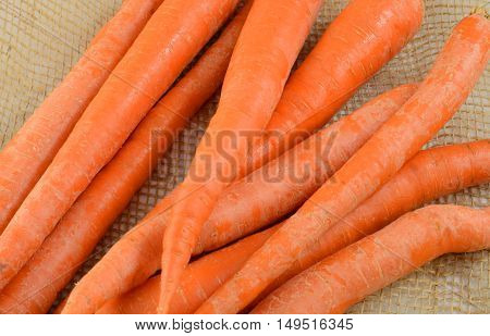Close up of rinsed raw uncooked carrots on burlap