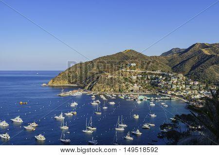 The Beautiful Catalina Island
