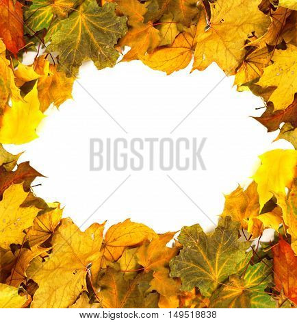 Autumn Dried Maple-leafs Background