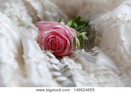 Pink rose on a background of a veil