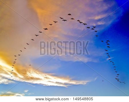 Flying birds in alignment in formation at sunset.