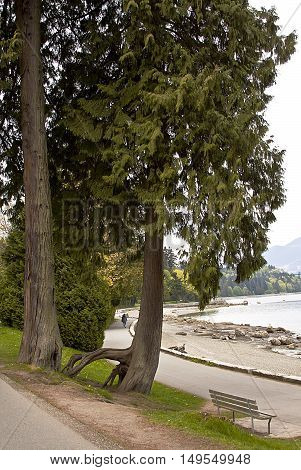Idyllic view of a single park bench on the walking path in Stanley Park, with shoreline, trees and foliage on a bright, sunny spring day with the Rockies in the top left corner.