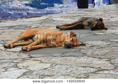 Two stray mutt dogs sleeping on the street.