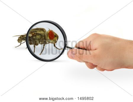 Hand Magnifying Fly