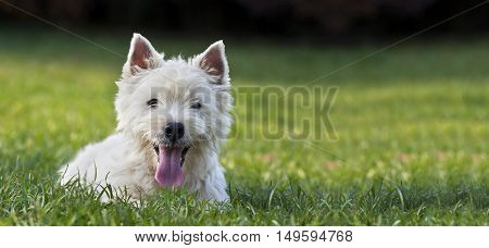 Website banner of a funny dog puppy as looking in the grass