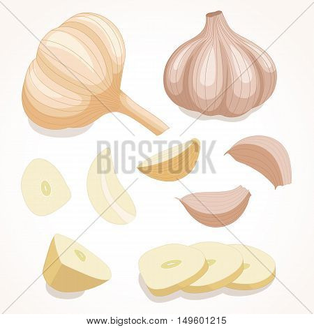 Fresh whole garlic. Vector illustration. Cloves and slices garlic isolated on background .