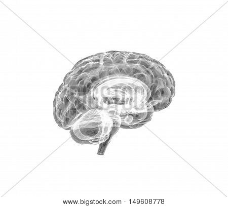 Model of the human brain. 3D illustration